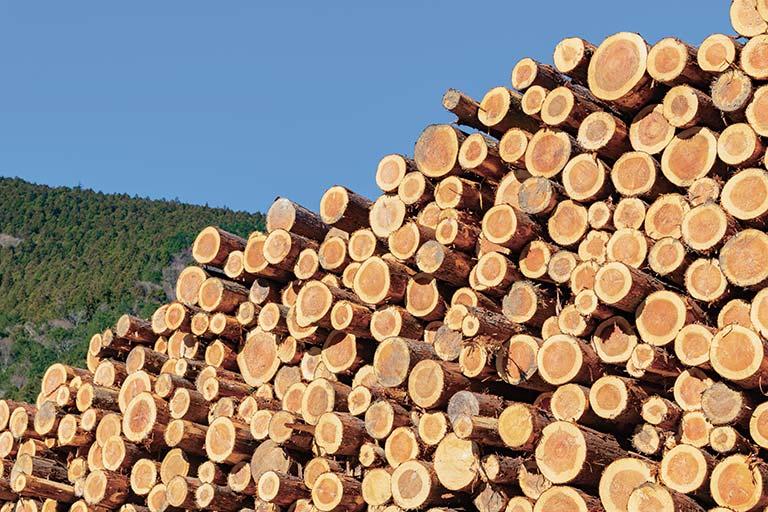 地域の木材産業と連携